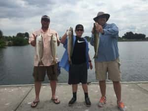 Giant Trout Invade Tampa Bay Waters 813-758-3406