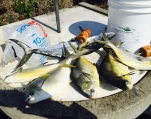 Pompano Fishing Tampa Bay